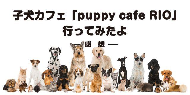 子犬カフェ(下北沢)行ってみたよ【感想】